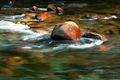 Bonito River, Ruidoso New Mexico, New Mexico, fine art, fine art landscape photography, abstract, sunrise, river, Spring, April