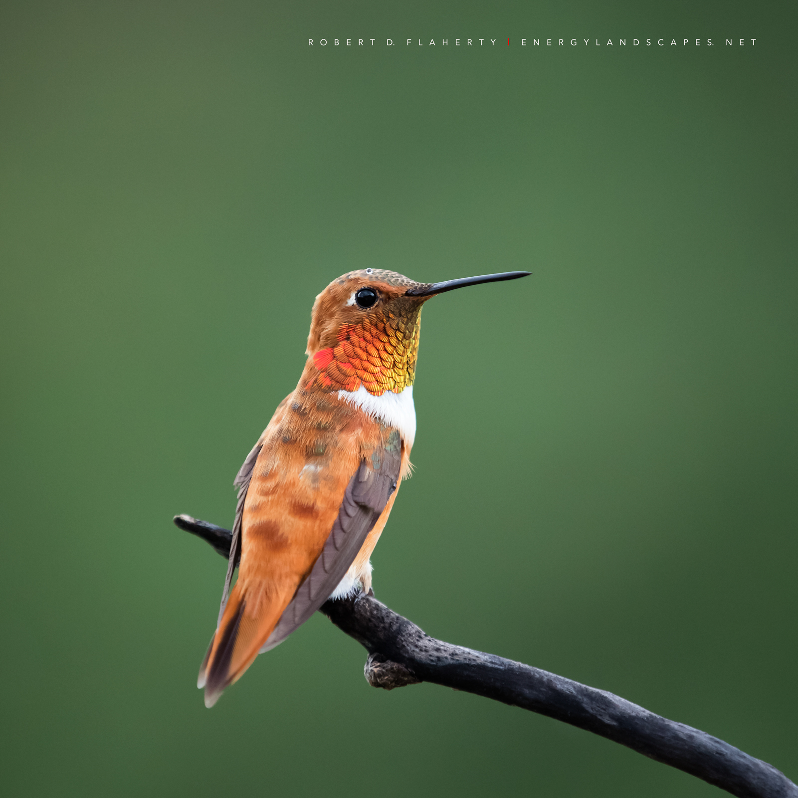 Summer, hummingbird, New Mexico, Ruidoso, New Mexico fine art landscape photography, South Central Mountains, photo