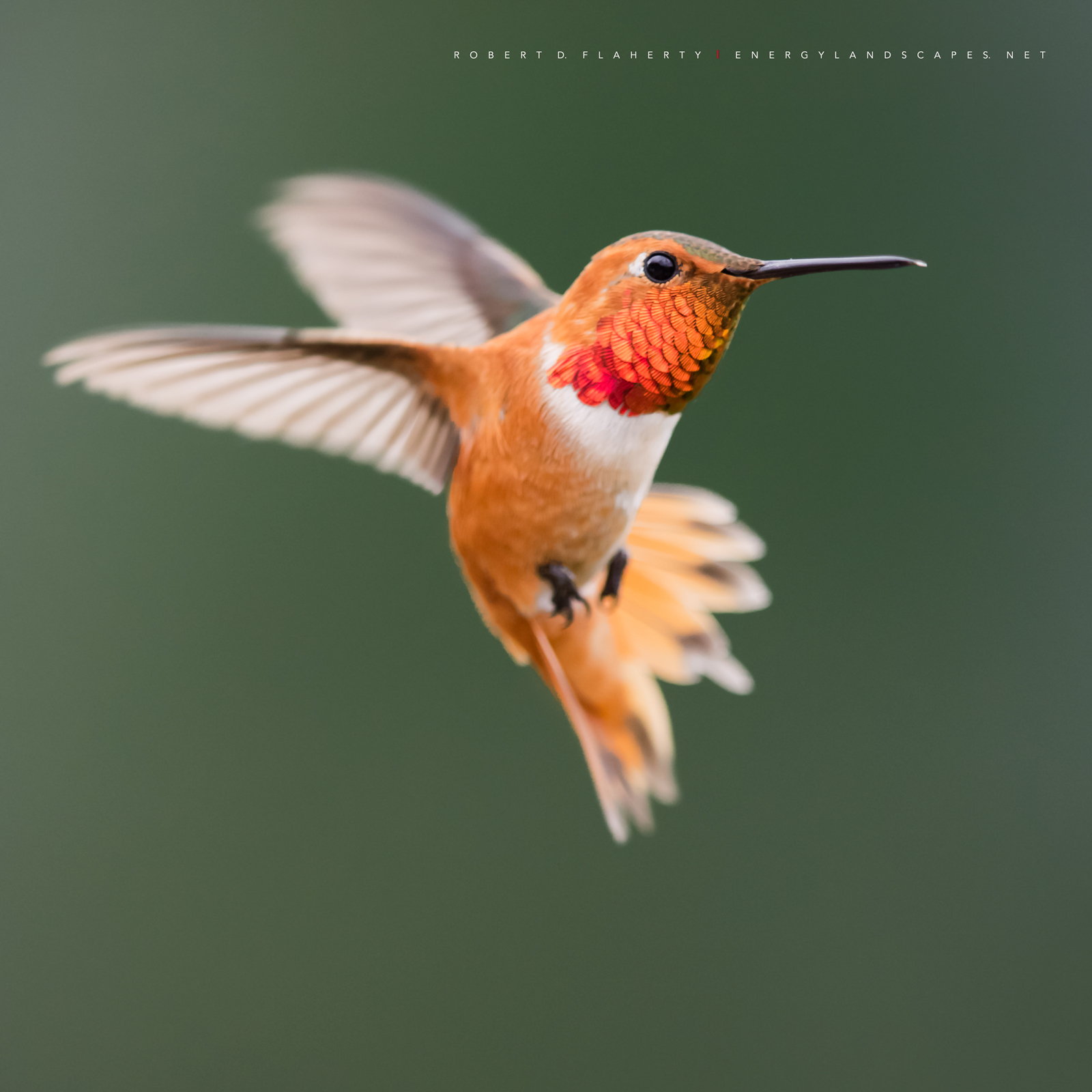 Touch Of Orange, hummingbird, hummingbirds, fine art photography, New Mexico, South Central Mountains, monsoon, Ruidoso, Ruidoso New Mexico, rain, fine art, orange, photo