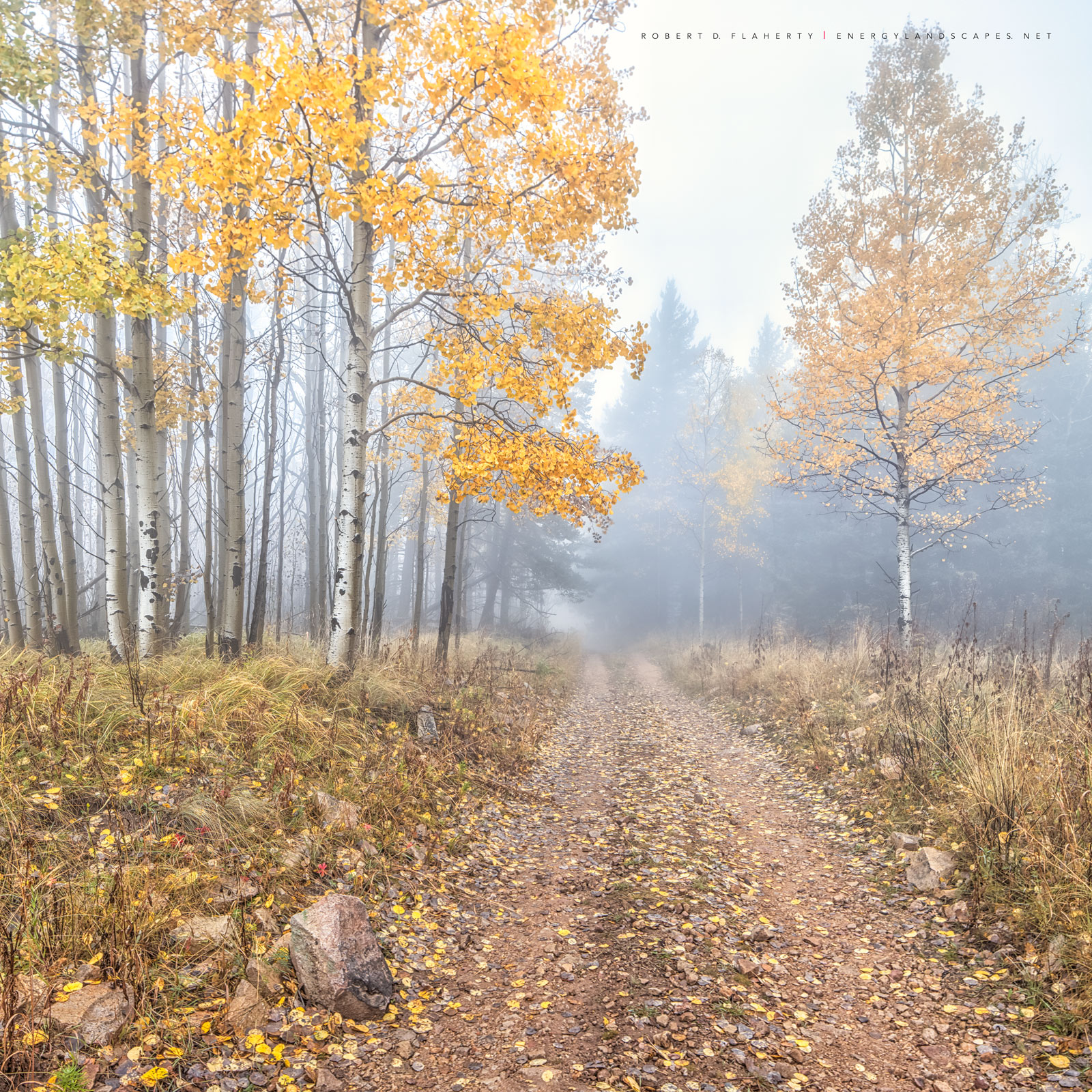 Apen, fog, Capitan Mountains, Fall, October, Ruidoso, photo